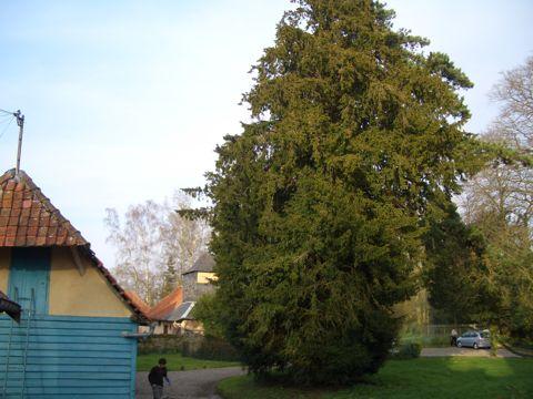 arbre-0.jpg