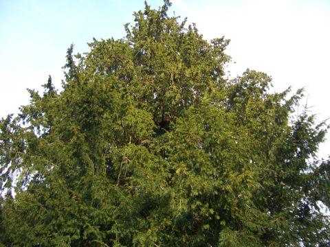 arbre-1.jpg